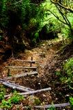 Mystisk skogbana Royaltyfria Bilder