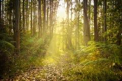 mystisk solnedgång för skog Arkivbild
