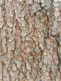 Mystisk stil för trädskäll Fotografering för Bildbyråer