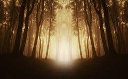 Mystisk symmetrisk skog med dimma Arkivbild