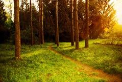 Mystisk tät skog med skimrande solljus för vandringsled Arkivbild