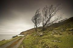 mystisk tree arkivfoton