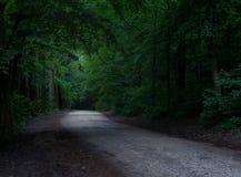 mystisk väg för skog royaltyfri fotografi