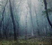 Mystisk vårskog i dimma Royaltyfria Foton
