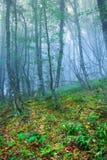Mystisk vårskog i dimma Royaltyfria Bilder