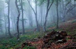 Mystisk vårskog i dimma Arkivfoton