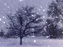 Mystisk vinternatt med konturer av träd royaltyfria bilder