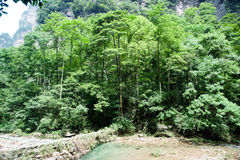 Mystiska berg Zhangjiajie, HUnan landskap i Kina Arkivfoton