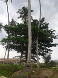 Mystiska Ghana Fotografering för Bildbyråer
