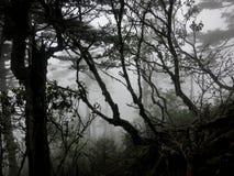 Mystiska trän på en dimmig bergvandring Royaltyfri Bild