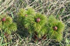 Mystiska växter blommar på gräset i Krimet royaltyfria bilder