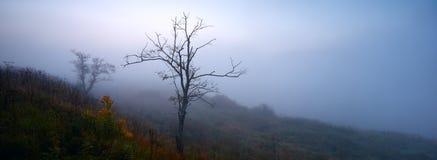 Mystiskt dimmigt landskap med det enkla trädet på banken av Volgaet River, panorama Fotografering för Bildbyråer