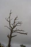 Mystiskt ensamt träd Fotografering för Bildbyråer