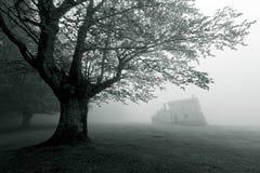 Mystiskt hus i skogen royaltyfria bilder