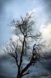 Mystiskt läskigt torrt träd mot den blåa himlen, backgroung Fotografering för Bildbyråer