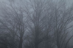 Mystiskt landskap av den dimmiga skogen Arkivfoto