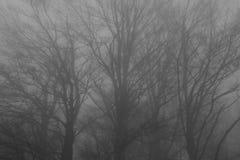 Mystiskt landskap av den dimmiga skogen Royaltyfria Bilder