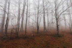 Mystiskt landskap av den dimmiga skogen Arkivbild