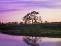 Mystiskt landskap av lakesiden Royaltyfria Bilder