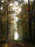 Mystiskt ljus i skog arkivfoton