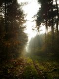 Mystiskt ljus i skog Royaltyfria Bilder