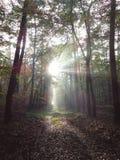 Mystiskt ljus i skog Arkivfoto