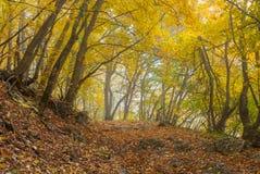 Mystiskt ställe i höstlig skog royaltyfri fotografi