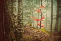 Mystiskt ställe i skog Royaltyfri Fotografi