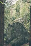 Mystiskt ställe i skog royaltyfri bild