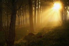 mystiskt trä Arkivfoton