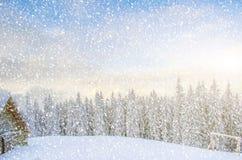 Mystiskt vinterlandskap av träd i solljus under en häftig snöstorm Royaltyfri Fotografi