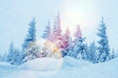 Mystiskt vinterlandskap av träd i solljus under snöfall Royaltyfri Fotografi
