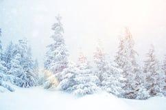 Mystiskt vinterlandskap av träd i solljus under snöfall Fotografering för Bildbyråer