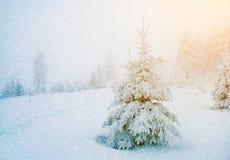 Mystiskt vinterlandskap med ett träd i solljus under snowfal royaltyfria foton