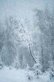 Mystiskt vinterlandskap med trädet under nytt år för snöfall, t Royaltyfria Foton
