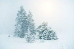 Mystiskt vinterlandskap med trädet under nytt år för snöfall, t Royaltyfria Bilder