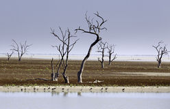 Mystrious dead trees Menindee Lakes Australia Royalty Free Stock Photography