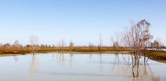 Mystrious dead trees Menindee Lakes Australia Stock Photo