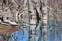 Mystrious dead trees Menindee Lakes Australia Stock Photography