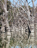 Mystrious dead trees Menindee Lakes Australia Royalty Free Stock Images