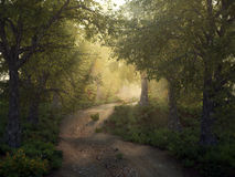 Mysty forest path Royalty Free Stock Photo