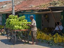 Bananas in an Indian marketplace. Mysuru, India - March 3, 2018: Traders in the section of Devarala market in which various varieties of bananas and plantains royalty free stock images