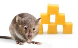 mysz zdjęcia stock