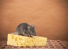 mysz obrazy stock