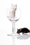 mysz czarny biel Obrazy Royalty Free