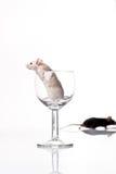 mysz czarny biel Obraz Royalty Free