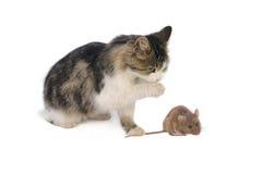 Mysz i kot Obrazy Royalty Free