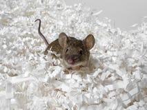 Mysz i papier obrazy stock