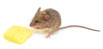 Mysz i ser Obrazy Royalty Free