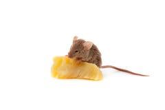 Mysz i ser zdjęcie royalty free